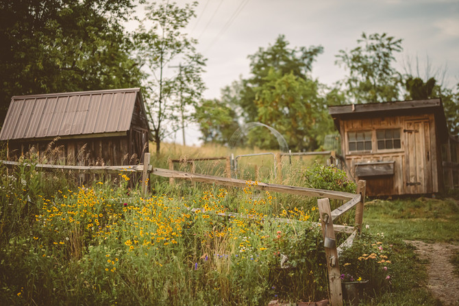 pollinator garden 2021