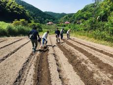 トロロアオイ栽培の用地の決定