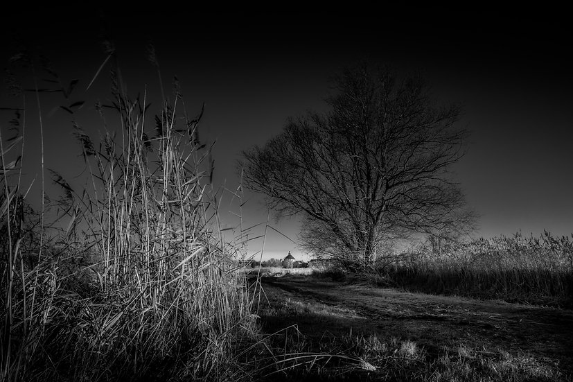 Between reed and tree