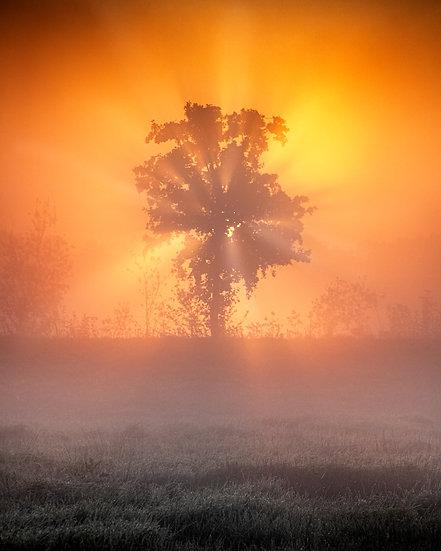 Treeburst