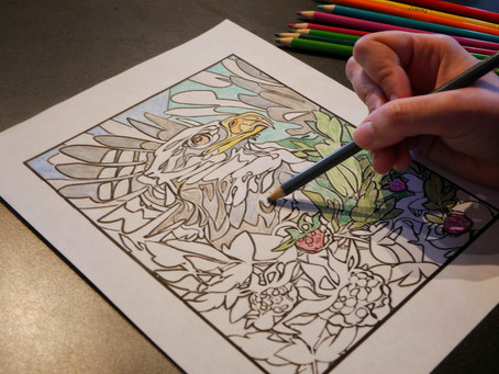 Keep busy during COVID-19 with our official PCMP Coloring Book!