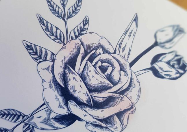 Daniella Close up Rose.jpg