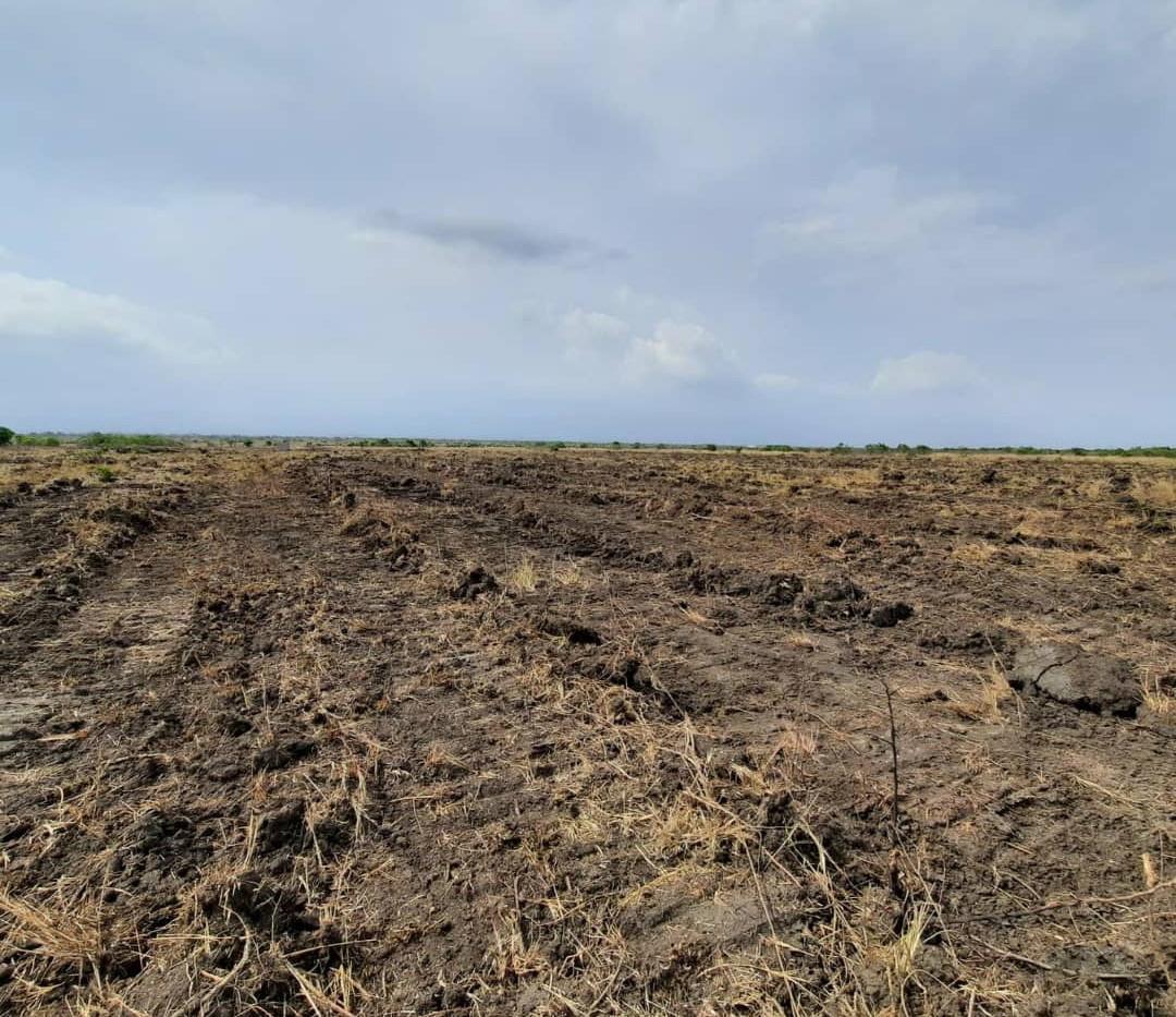 Faim Land Site - Project