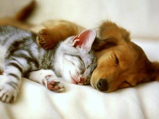 ¿Cómo poner una alarma con mascotas en casa?