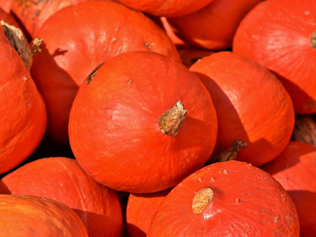 Gemüse & Obst für deinen Hund im November