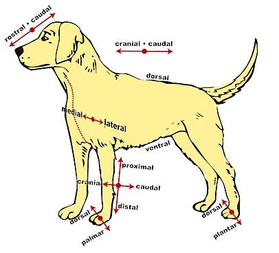 hundefitness nürnberg