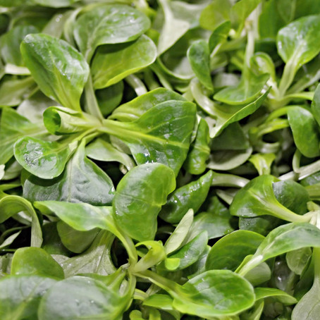 Gemüse & Obst für deinen Hund im Februar