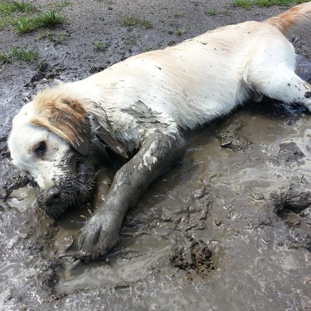 Gesunde Sauberkeit im Tierhaushalt