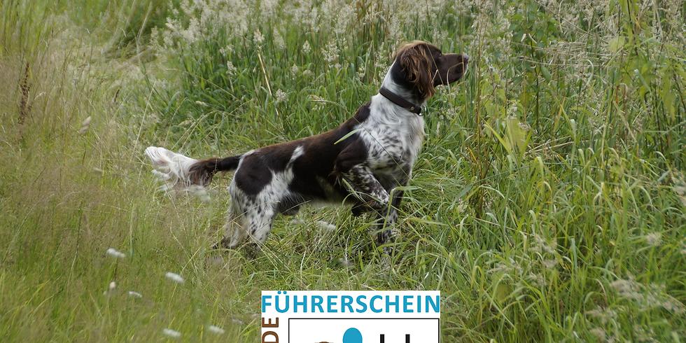 Hund, Halter & Recht (HF 5)