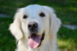 dog-bitch-3665315_1920.jpg