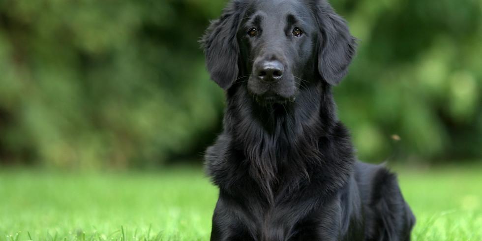 Alltagstraining & Hundeführerschein