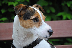 dog-2097102_1920_edited.jpg