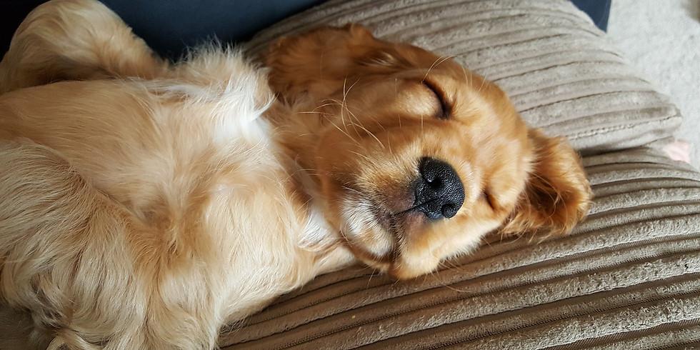 Hunde-Talk: Take it easy!