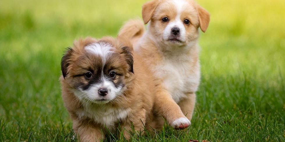 Sozial-Spaziergang für Welpen & kleine Hunde