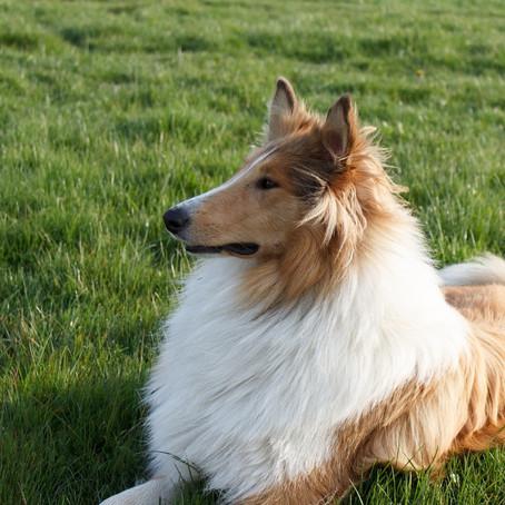 Ausbildung zum Hundeführerschein