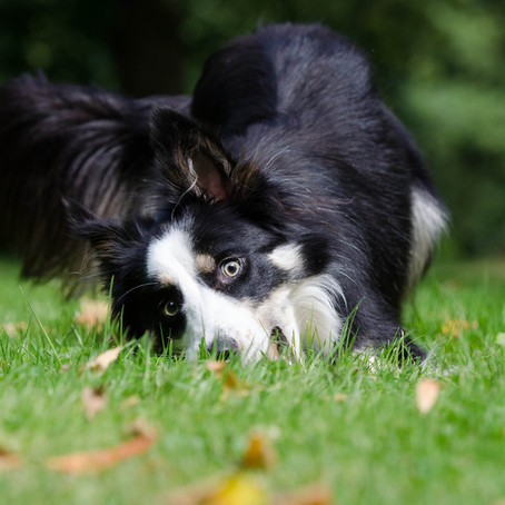 Lets fetz! - Schredder-Spaß für deinen Hund