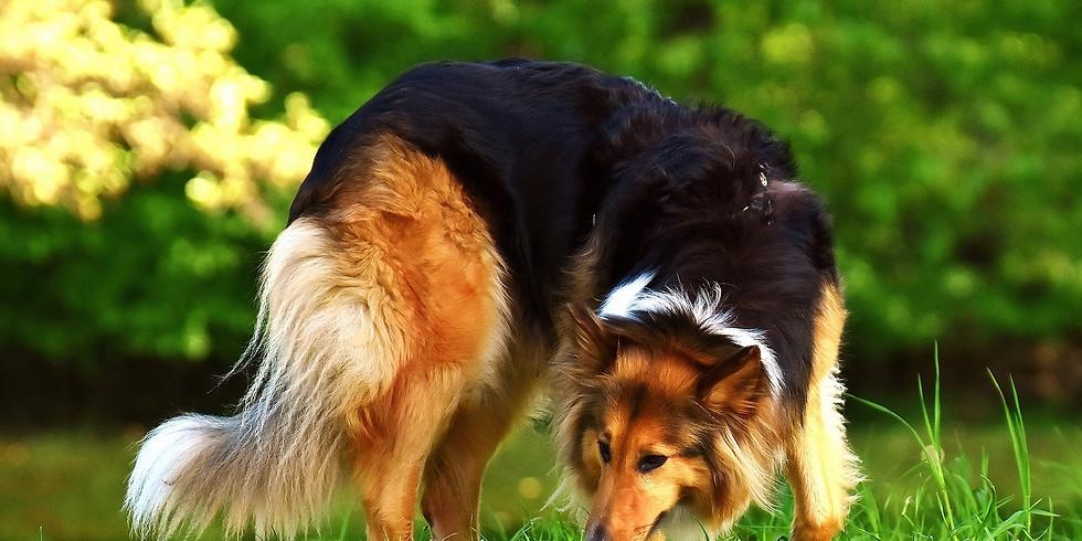 Hunde-Talk: Anti-Giftköder-Training