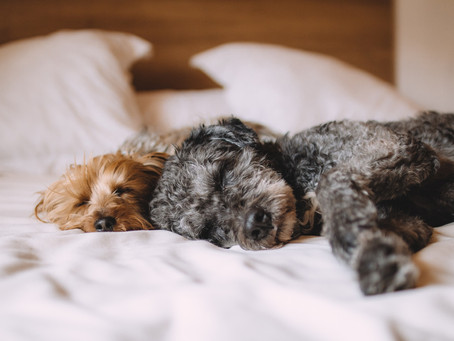 Entspanntes Silvester für deinen Hund