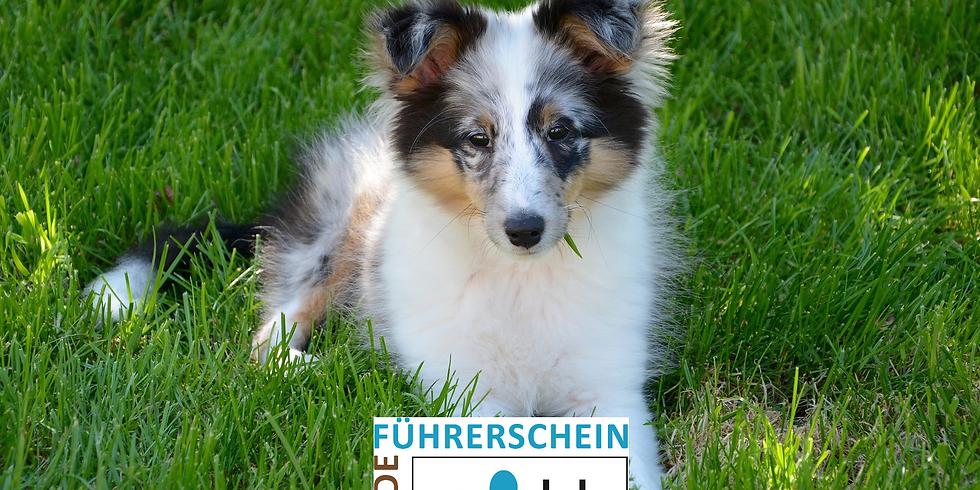 Anschaffung eines Hundes, der Welpe & der Junghund (1)