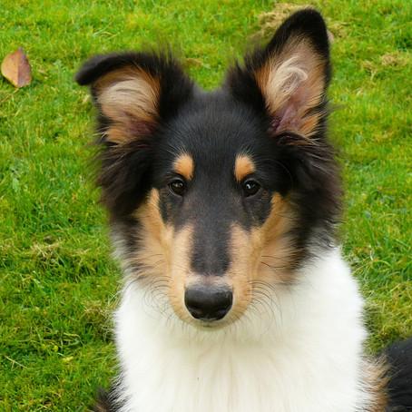 Das Belohnungs-Experiment: Mitmach-Aufgabe für dich und deinen Hund
