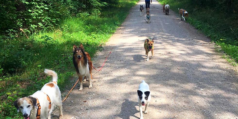 Sozial-Spaziergang