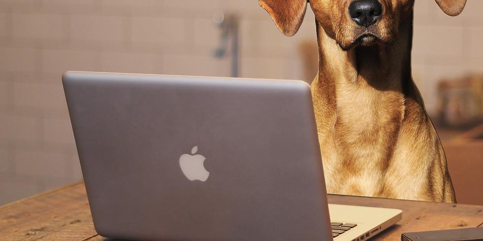 Hunde-Talk: Entspannung