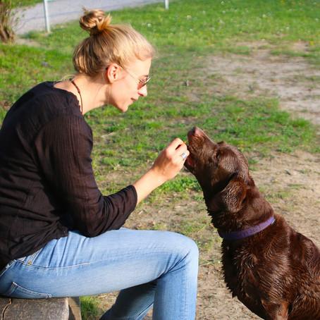 30 Trainingstipps für dich und deinen Hund