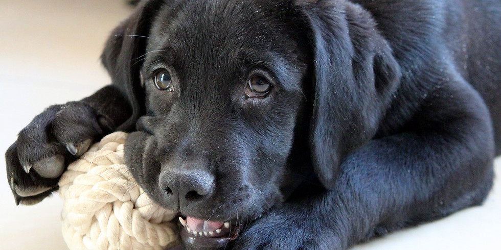 Hunde-Talk: Hilfe Pubertät!?