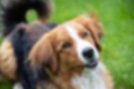 dog-4203154_1920_edited.jpg