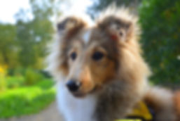 dog-2855650_1920_edited.jpg