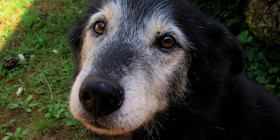 Hunde-Senioren - Wichtiges für den Lebensabend
