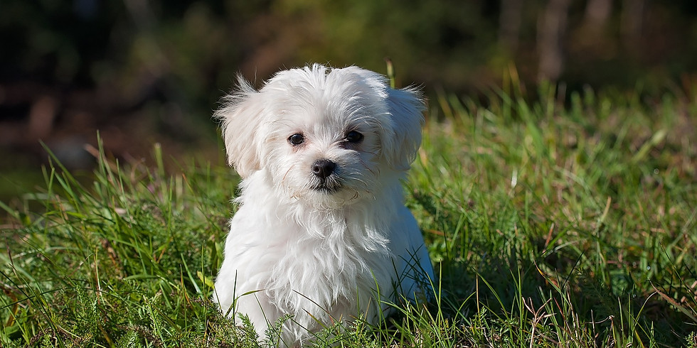 Welpen- & Junghunde-Training für 2