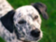 dog-1699336_1920.jpg