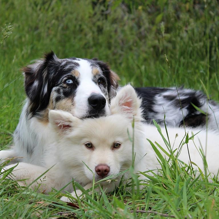 Gute-Freunde-Spaziergang