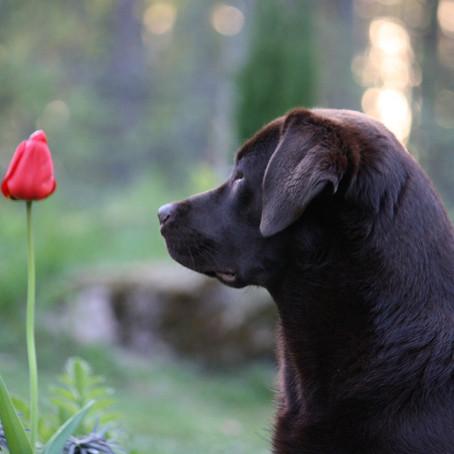 Dufte Entspannung für deinen Hund