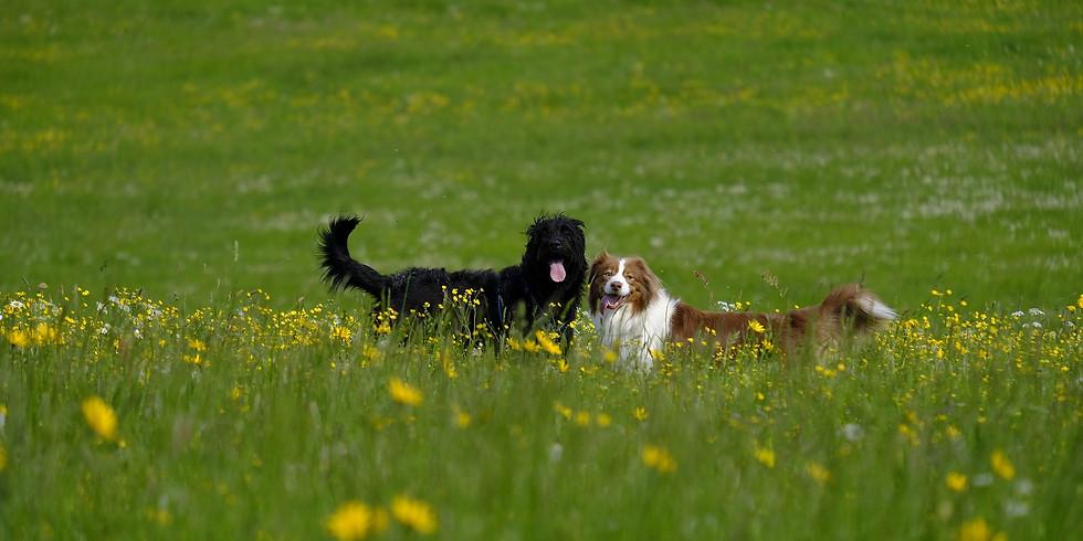 "Spaziergang ""Hunde-1x1"" (1)"