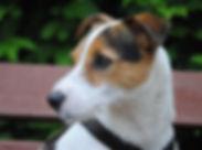 dog-2097102_1920.jpg