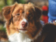 dog-3809760_1920.jpg