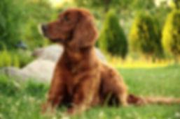 Ernährungsberatung Hund Nürnberg