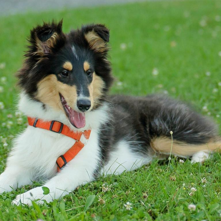 Start-Termin für Welpen & Junghunde
