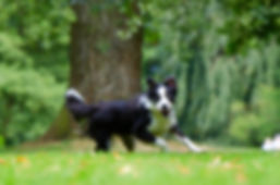 Hundeschule Nürnberg