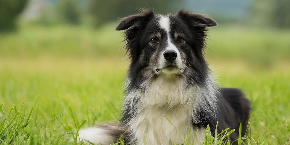 Kurs für den IBH-Hundeführerschein