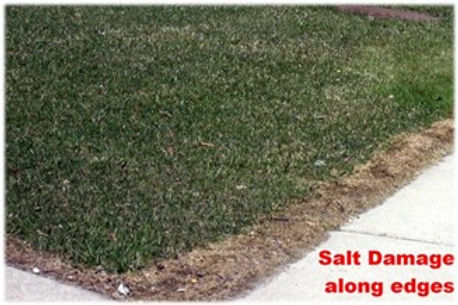 Save Your Lawn From Salt Damage