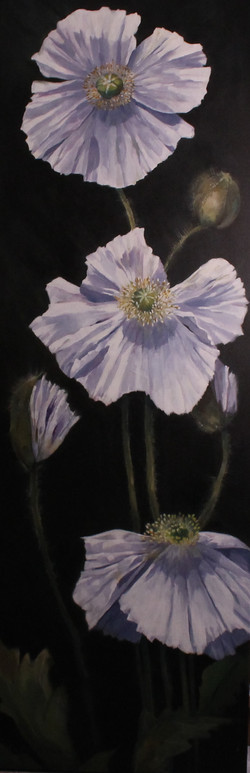 The Secrets of White Poppies