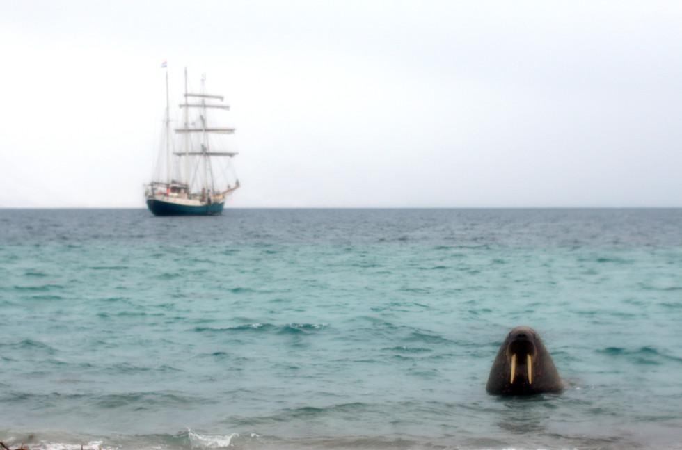 Arctic Antigua I