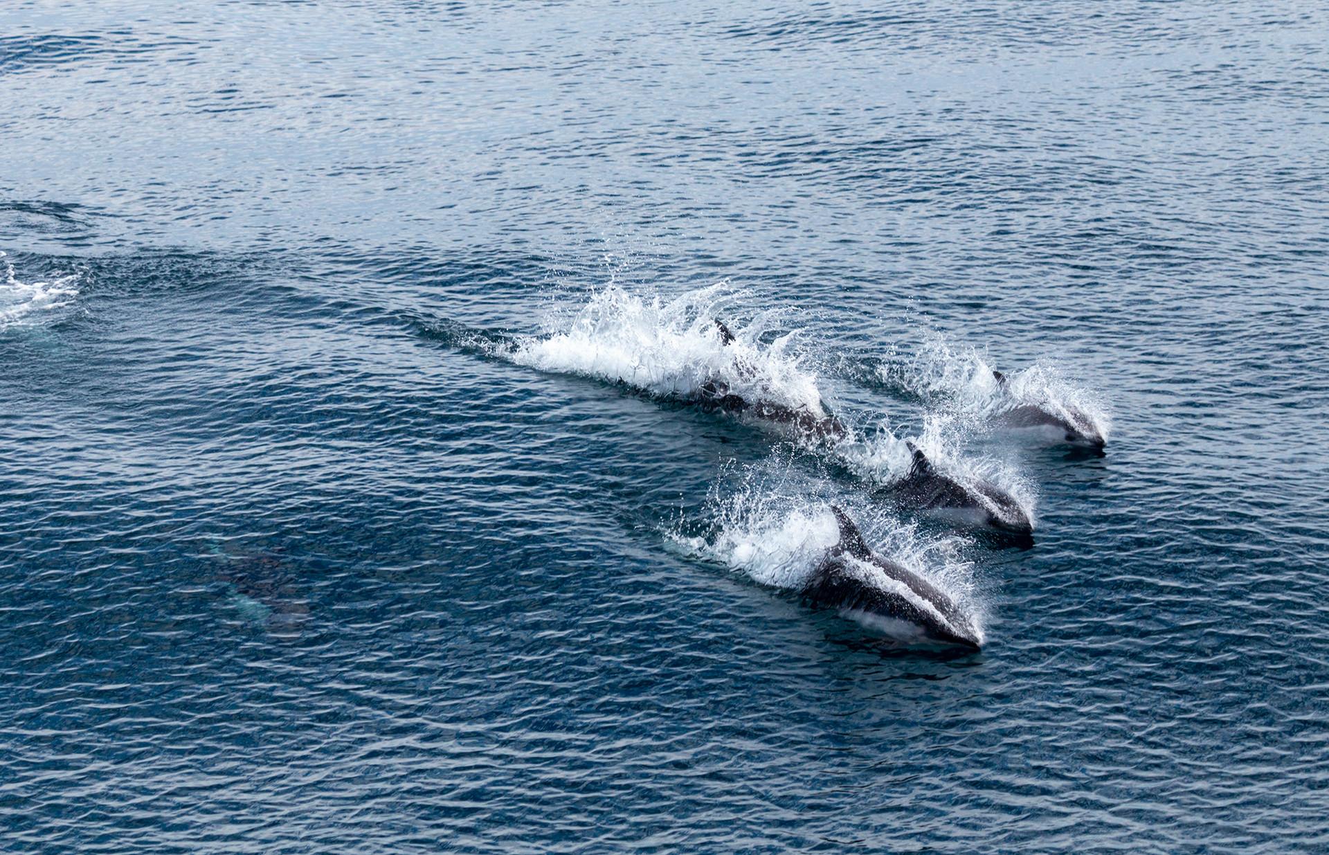 Antarctica Orcas I