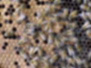 SAM_0583 (1).jpg