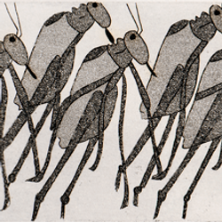 LeapingGrasshoppers.png