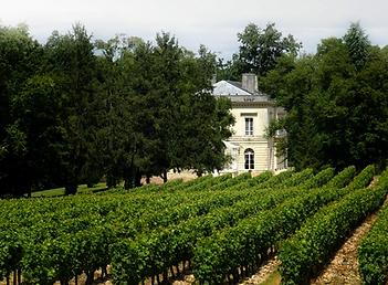 vingård.png