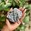 Thumbnail: Raw Blue Calcite